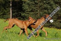 20110415_shakawe_lisimba_adongo_makakadi__achammer_24