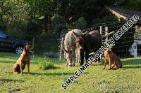 20110415_shakawe_lisimba_adongo_makakadi__achammer_14